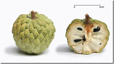 800px-Sugar_apple_with_cross_section